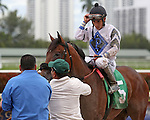 HALLANDALE BEACH, FL - FEBRUARY 06:     Kelly Tough #5 with Paco Lopez  heads to the winners' circle after breaking his maiden on Donn Handicap Day at Gulfstream Park on February 06, 2016 in Hallandale Beach, Florida. (Photo by Liz Lamont)