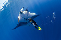 scuba diver and giant oceanic manta ray, Mobula birostris, formerly Manta birostris, San Benedicto, Revillagigedo (Socorro) Islands, Mexico, East Pacific Ocean