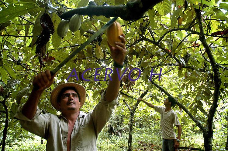 """Agricultor Milton Pereira Ramos, paranaense, 40 anos,  trabalha com a produÁ""""o de cacau na transamazÙnica, <br /> Anap˙ , Par· , Brasil<br /> Foto Paulo Santos/Interfoto<br /> 168/02/2005"""