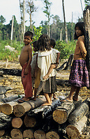 CAMBODIA, Mekong region, Stung Treng, logging of rainforest, cleared and burned forest, children of settlers