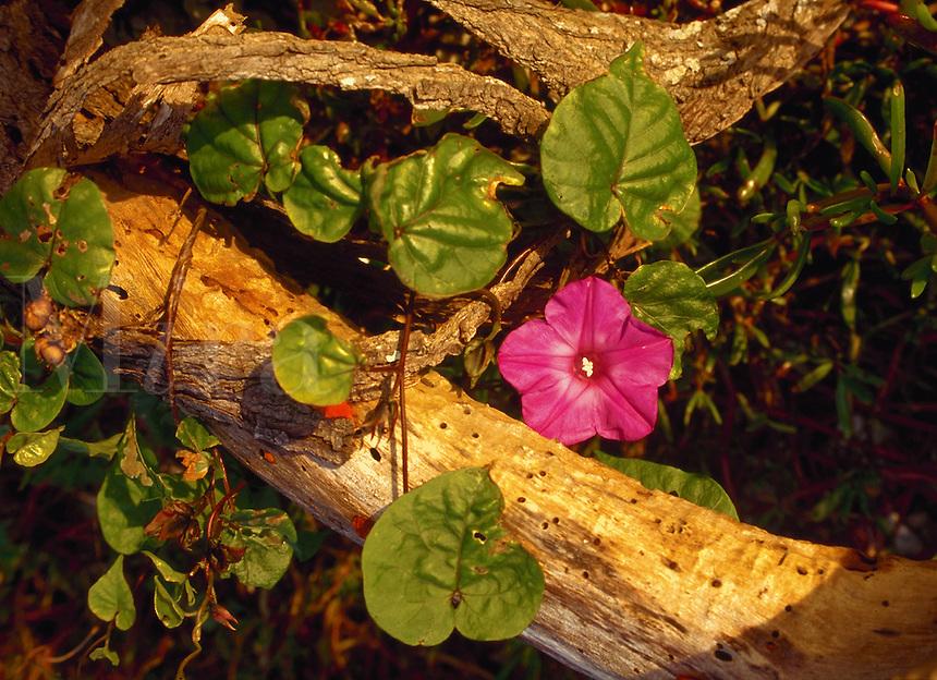 Flower detail on Sand Key, Florida