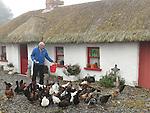 Frank Godfrey's Hens