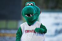 "Kannapolis Intimidators mascot ""Tim E. Gator"" competes in the mascot race between innings of the South Atlantic League game between the Lakewood BlueClaws and the Kannapolis Intimidators at Kannapolis Intimidators Stadium on April 6, 2017 in Kannapolis, North Carolina.  The BlueClaws defeated the Intimidators 7-5.  (Brian Westerholt/Four Seam Images)"