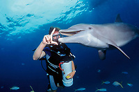 trainer and bottlenose dolphin, Tursiops truncatus, Bahamas, Caribbean Sea, Atlantic Ocean ( c )
