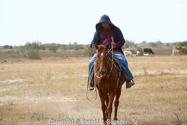 HORSEBACK RIDER at WORK (2)