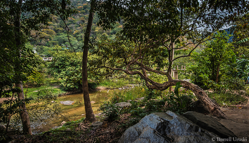 Fine Art Landscape Photograph of an ancient tree over hanging a small tributary of Horcones river that flows by to a small fishing village called Boca de Tomatlán. This ancient tree reminded me of one of the Japanese Bonsai trees that is set in a real and natural picturesque river setting in Mexico.