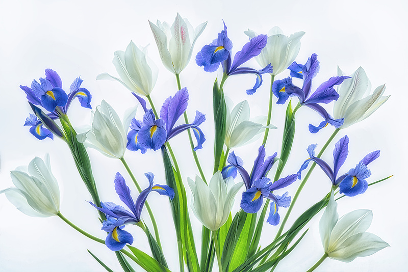 Boquet of tulips and iris.