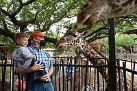 2021-04-10 Houston Zoo Asante Giraffes
