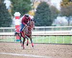 Jasper Prince, trained by Hideyuki Mori, exercises in preparation for the Breeders' Cup Sprint at Keeneland 10.30.20.
