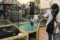 A Japanese teenage girl looks at a Japanese mini pig for sale at 150,000 (1688 US$) at the Noah Inner City Zoo, a pet shop that sell exotic animals. To the left is a Short-clawed Otter which are protected species.