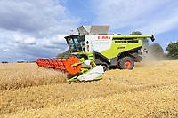 29-7-2021 Harvesting Winter barley in Rutland <br /> ©Tim Scrivener Photographer 07850 303986<br />      ....Covering Agriculture In The UK....