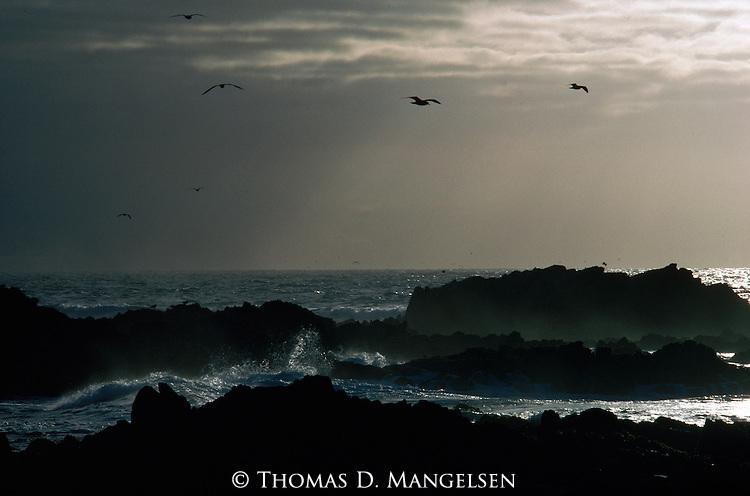 Gulls fly above ocean waves crashing against rocks on the Oregon coast.