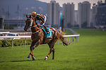 MAY 3,2015: Able Friend,ridden by Joao Moreira,wins the Champions Mile at Sha Tin in New Territories,Hong Kong. Kazushi Ishida/ESW/CSM