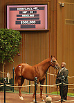 12 September 2010.  Hip #61 Smart Strike - Lassie's Legacy colt, sold for $300,000 at the Keeneland September Yearling Sale.  Consigned by Lane's End.