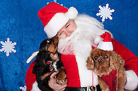 Dogs are photographed with Santa at a fundraiser for Dogs Deserve Better at Pet Pros in Redmond, WA on December 12, 2010. (photo by Karen Ducey)Copper and Bailey (not sure who is who) are photographed with Santa at a fundraiser for Dogs Deserve Better at Pet Pros in Redmond, WA on December 12, 2010. (photo by Karen Ducey)
