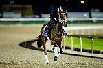 October 31, 2018 : Belle Laura, trained by Norm W. Casse, exercises in preparation for the Breeders' Cup Juvenile Fillies Turf at Churchill Downs on October 31, 2018 in Louisville, Kentucky. Evers/ESW/Breeders Cup