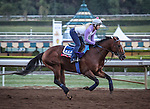 October 26, 2014: Mr Sexy exercises in preparation for the Breeders' Cup Sprint at Santa Anita Park in Arcadia, California on October 26, 2014. Zoe Metz/ESW/CSM