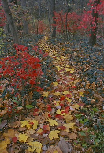 Pathway through forest in fall