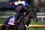 October 30, 2018 : My Gal Betty, trained by Roger L. Attfield, exercises in preparation for the Breeders' Cup Juvenile Fillies Turf at Churchill Downs on October 30, 2018 in Louisville, Kentucky. Michael McInally/Eclipse Sportswire/CSM
