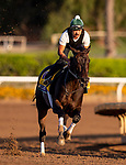 OCT 27: Breeders' Cup Distaff entrant Elate, trained by William I. Mott, works at Santa Anita Park in Arcadia, California on Oct 27, 2019. Evers/Eclipse Sportswire/Breeders' Cup