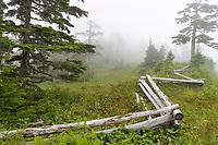 Tongass National Forest, Baranof Island, Sitka, Alaska