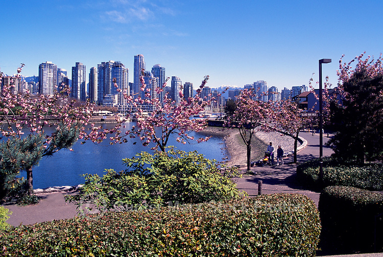 """Vancouver City Skyline, Downtown at Yaletown and """"False Creek"""", BC, British Columbia, Canada, Spring"""