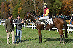 07 November2010:  Tizsilk and Paddy Young after winning the Constitution Hurdle at Montpelier Hunt Races in Montpelier Station, Va. Tizsilk is owned by Roger O'Byrne and trained by Tom Voss.    Susan M. Carter/Eclipse Sportswire