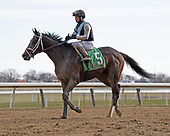 Belmont Stakes Day contenders