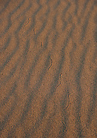 Snake tracks in dunes at Death Valley.