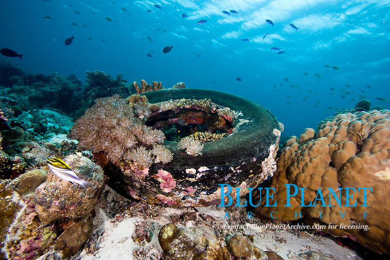 Coral encrusted tyre at Nalusuan Marine Sanctuary, Cebu