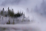 Early morning mist over coastal coniferous forest. Near Khutze Inlet, Great Bear Rainforest, British Columbia, Canada, October 2013.