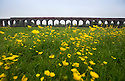 04/06/16<br /> <br /> The warmth of the day made it almost impossible to spot any steam coming from the chimney of The Flying Scotsman as it crossed over Harringworth Viaduct, in Rutland en route from London to York. The crossing, also known as Welland Viaduct,  is Britain's longest masonry viaduct with 82 arches stretching 1,275 yards across the river Welland in Rutland.<br /> <br /> <br /> All Rights Reserved, F Stop Press Ltd. +44 (0)1335 418365