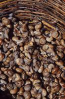 Europe/Italie/Sicile/Palerme : Escargots sur le marché