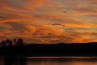 Sunset, Bosque del Apache NWR