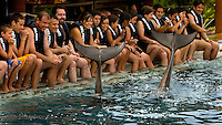 Participants in the swim with the dolphin program at Delfiniti Ixtapa in downtown Ixtapa watch as two dolphins wave with their tails during a show. (photo taken August 2007) Photo by Patrick Schneider Photo.com