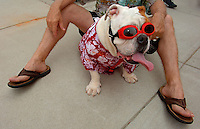 A bulldog looks festive at the annual Fourth of July Celebration and community parade in Birkdale Village in Huntersville, NC. Birkdale Village combines the best of shopping, dining, apartments and entertainment venues within a 52-acre mixed-use development.