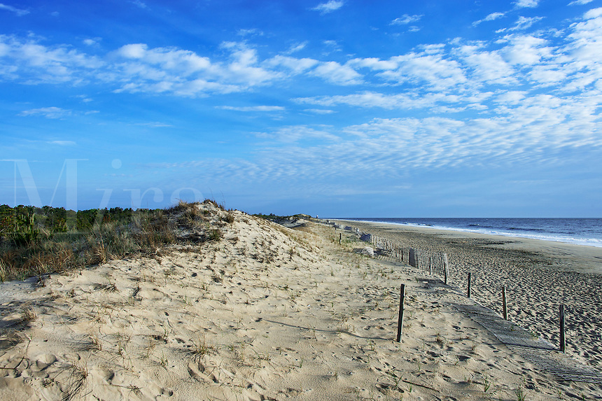 Beach and dunes, Cape Henlopen, Lewes, Delaware, USA
