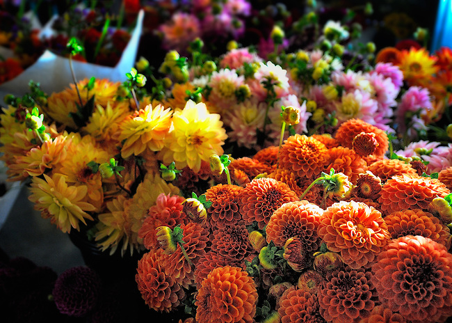 Colorful flowers on display