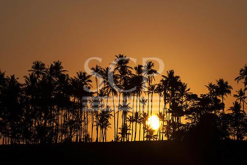 Northeast Brazil. Golden sun setting behind palm trees.