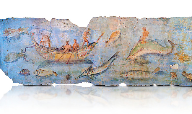 Roman Fresco with boats and marine life from the second quarter of the first century AD. (mosaico fauna marina da porto fluviale di san paolo), museo nazionale romano ( National Roman Museum), Rome, Italy. inv. 121462 .  Against a white background.<br /> The frescoes depict boats decorated as boats which went along the Tiber on festival days; their shape appears to be the caudicariae boats, used to transport merchandise. In the fresco fragment exhibited here (Ambiente E) the boat on the left depicts probably the group of 'side Serapide and Demetra on the stern, whereas the one on the right presents a crowned character on the bow and, on the stern, a feminine figure fluctuating in the air. Between the two boats, a young boy (a cupid or Palaimon-Portunus) rides a dolphin. All around are depicted several fish incredibly casting their shadows on the sea. The ichthyic fauna, lifeless as in still life decoration, is detailed as in a scientific catalogue. For the most part the represented species live next to the coast or were bred by the Romans in the piscinae salsac or in ponds. It is possible to recognize the rock mullet (mullus sunnuletus) and the mud one (mullus barbatu4 the scorpion fish (scorpoena) the dentex (dentex dentex), the aguglia (belone agus) the dolphin (delphinus delphis) and the golden mullet (lire curate).