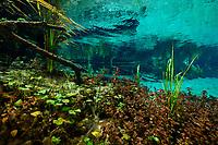 Ichetucknee Springs State Park, Florida