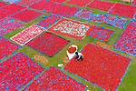 Red chillis dry among green fields in Bangladesh by Saad Abdullah