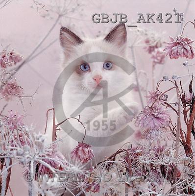Kim, CHRISTMAS ANIMALS, photos(GBJBAK421,#XA#) ,puzzles