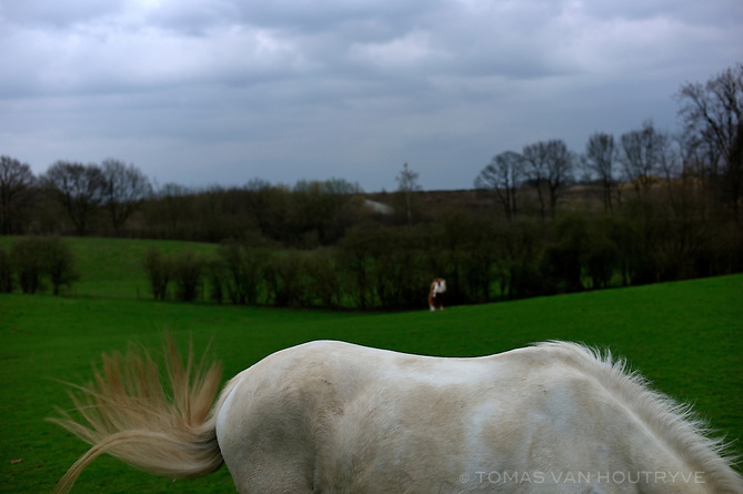A horse is seen in a field in Braine-l'Alleud, Belgium on April 16, 2013.