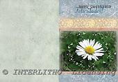 Alfredo, FLOWERS, paintings, BRTOCH40518CP,#F# Blumen, flores, illustrations, pinturas