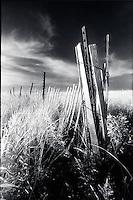 Dune fence, Sag Harbor, NY<br />