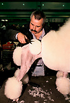 Crufts Dog Show 1990s National exhibition Centre Birmingham UK. Standard White Poodle being trimmed getting ready to be shown Competitive hobby 1991<br />