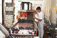 grape sorting table quinta de sao jorge alentejo portugal