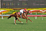 06 February 2010:  Loansome Street with jockey Rajiv Maragh wins the fifth race at Gulfstream Park in Hallandale Beach, FL.