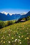 Oesterreich, Tirol, Fruehling im Zillertal, oberhalb von Hippach: Blick ins Zillertal, ganz im Hintergrund Mayrhofen und die noch schneebedeckten Gipfel der Zillertaler Alpen | Austria, Tyrol, springtime at Ziller-Valley, above Hippach: view into Ziller Valley, at background Mayrhofen and the still snow covered summits of Ziller-Valley Alps
